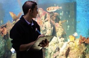 Fishy Stock Take at Blue Reef Aquarium (2)