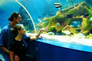 Couple in Blue Reef Aquarium's underwater tunnel 1