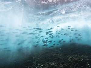 The importance of ocean conservation